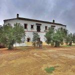 Fotos de «La Hacienda de los Caballos»